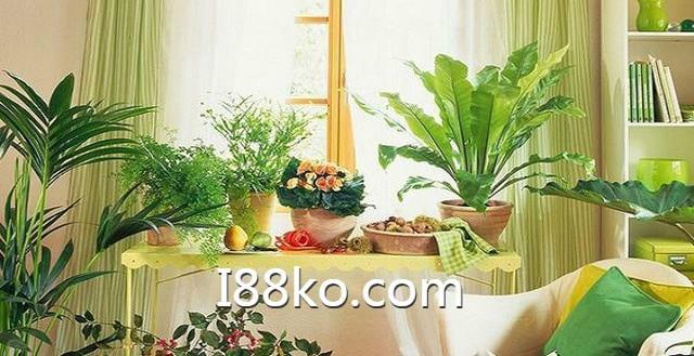 2020客廳財位植物、家中財位擺放、虎尾蘭風水、客廳植物推薦、最佳室內植物